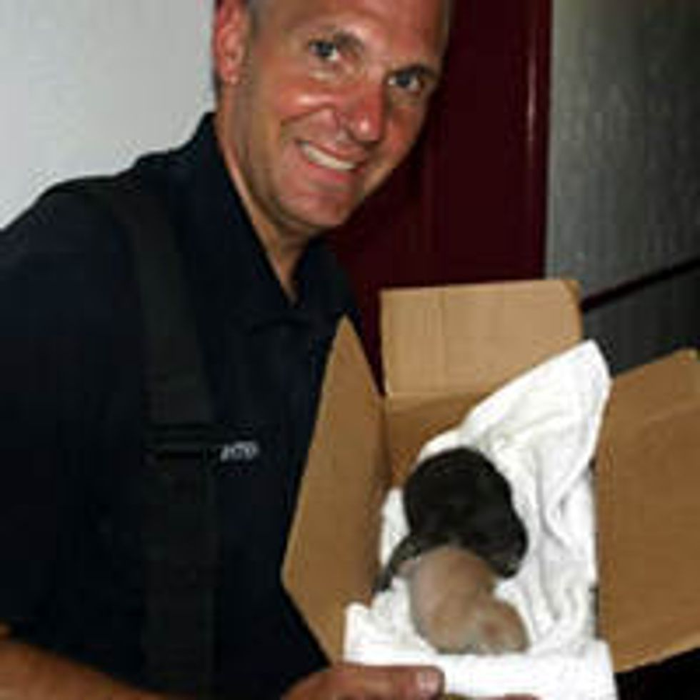 Kittens Born During House Fire Saved By Firefighters