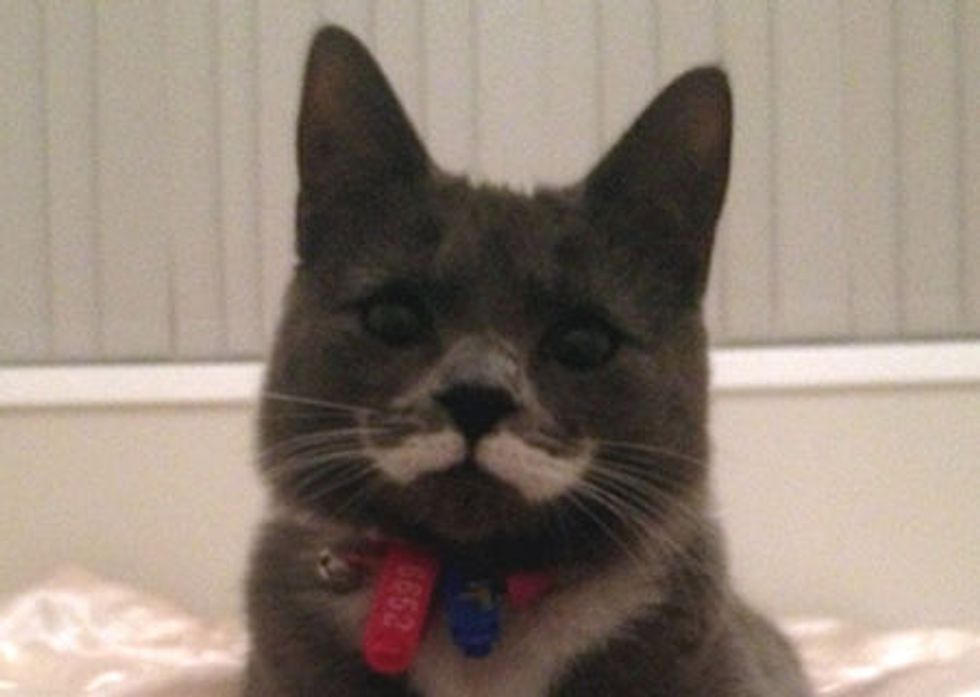 Mustache Kitty Finds Forever Home