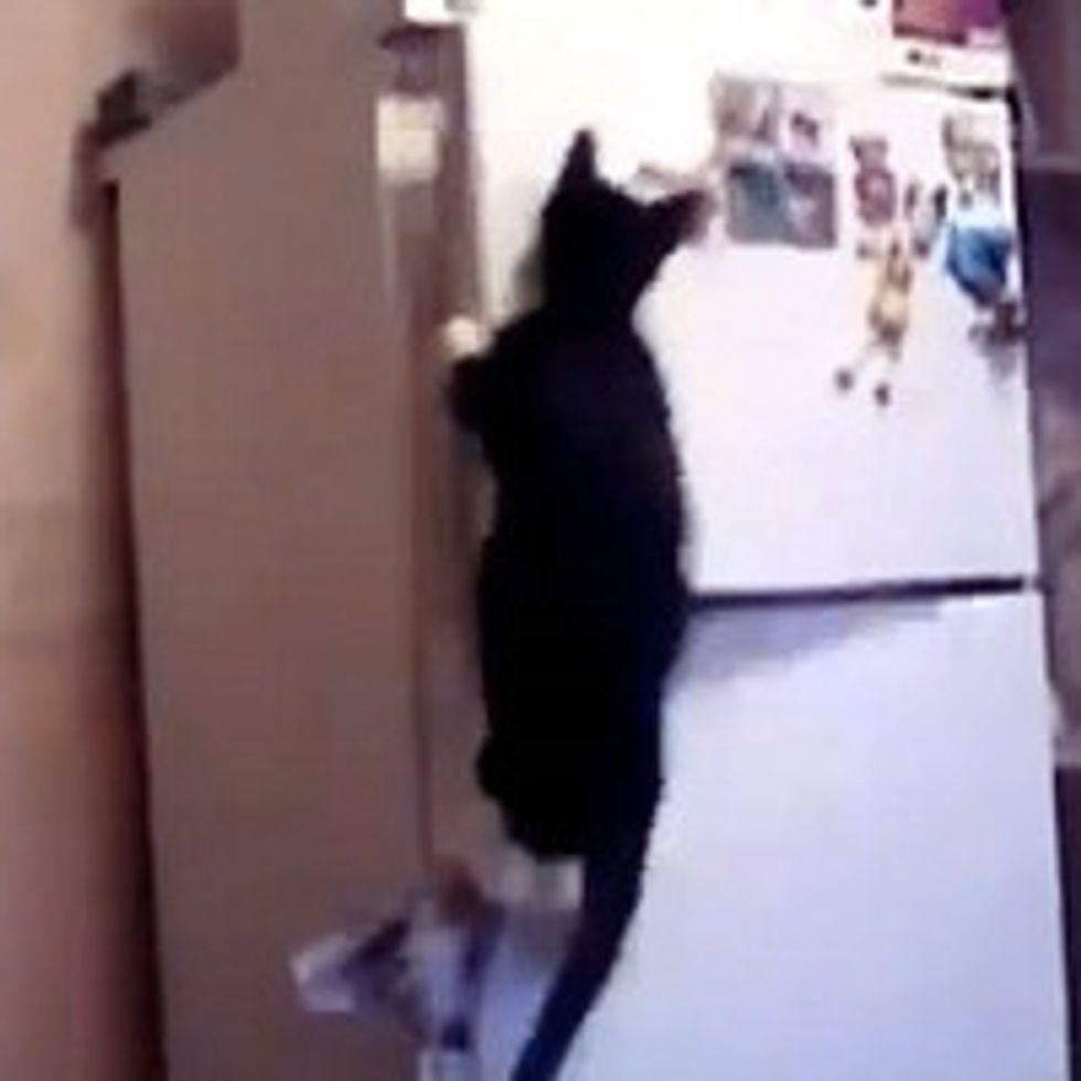 Indiana Jones Cat Opens Freezer