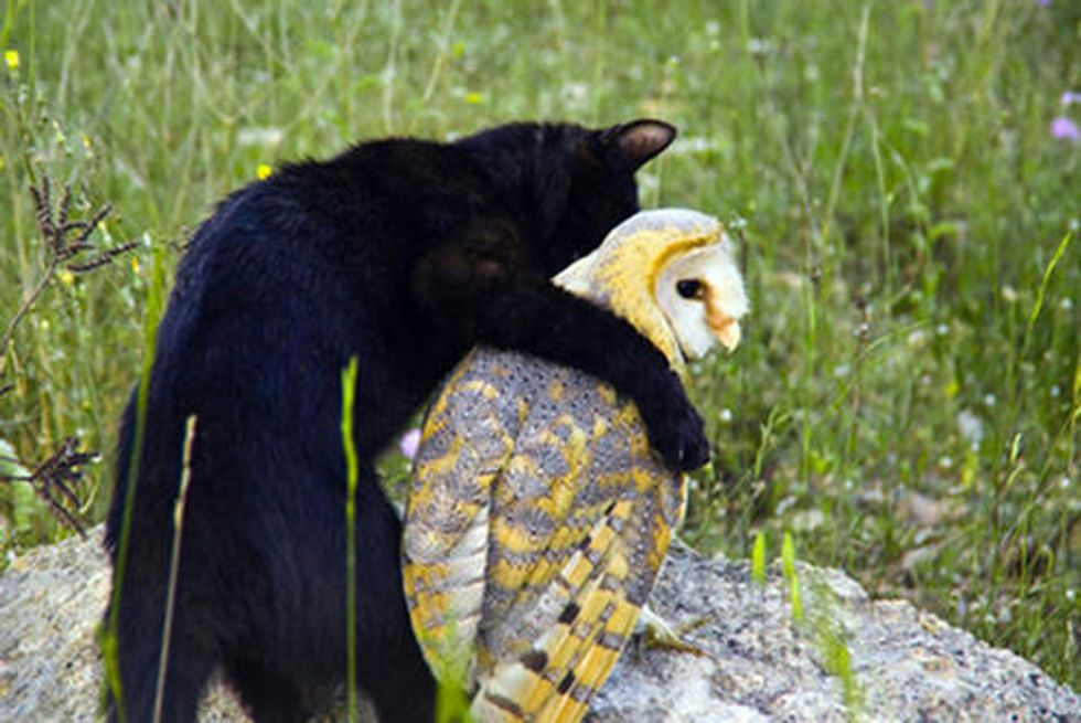Cat and Owl - Best Friends