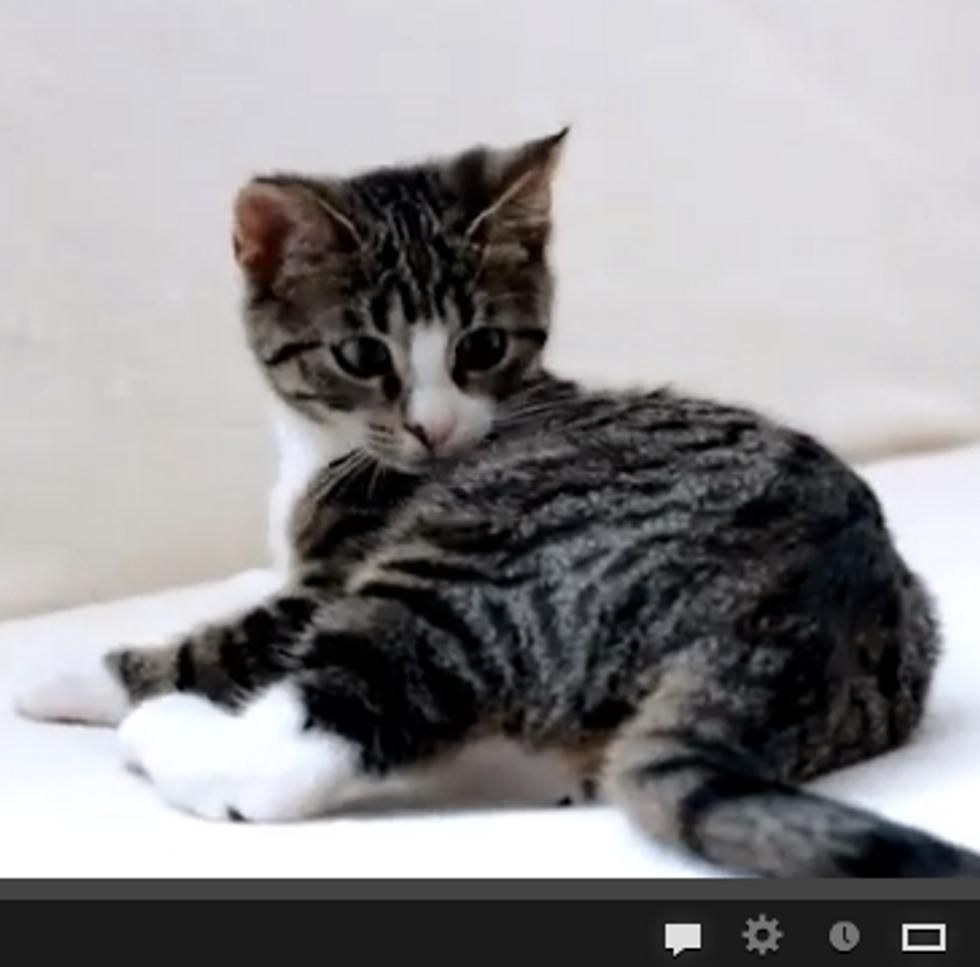 Kitten vs Own Tail