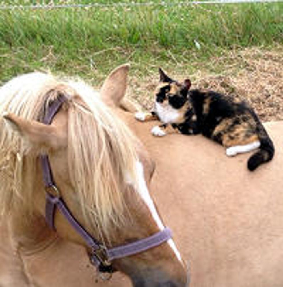 Cat Loves Horses