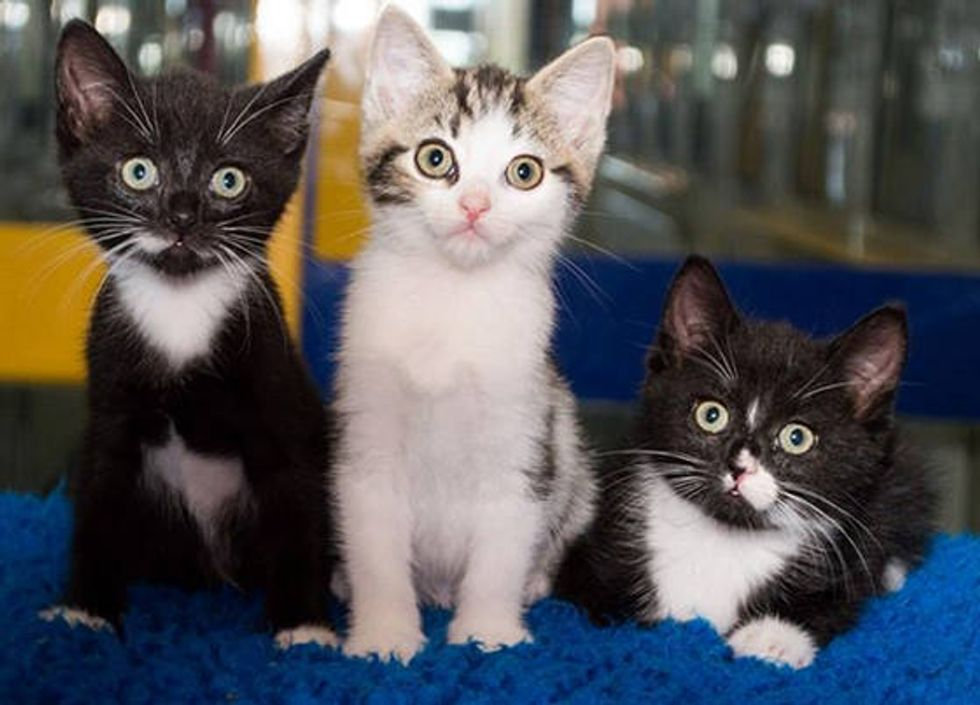 Three Kittens Found Inside Tied Trash Bag