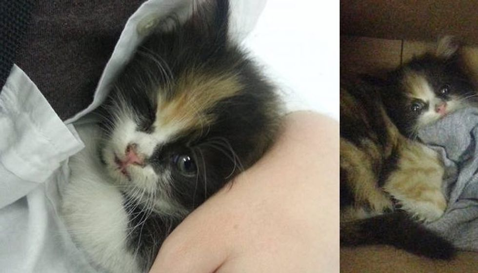 Calico Kitten from the Moment Of Her Rescue to Now