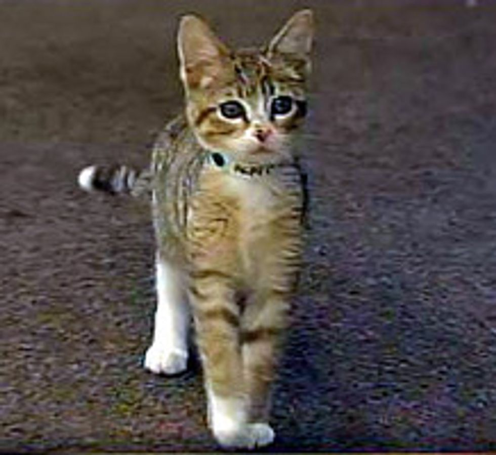 Kitten Meows For Help At Yarnell Hill Fire