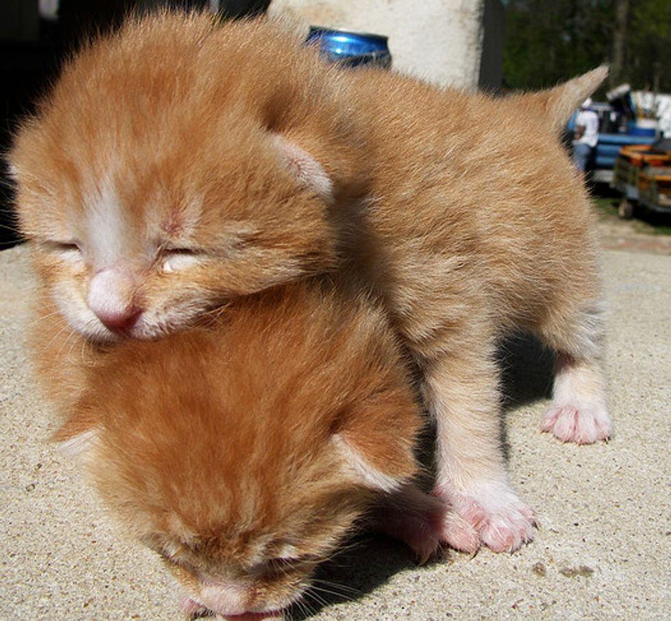 Leap Kitten