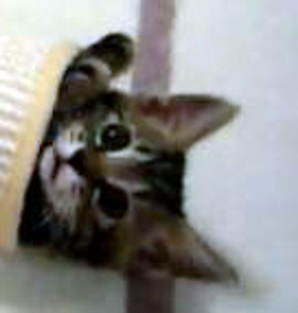 Kittens Crazy for Tube