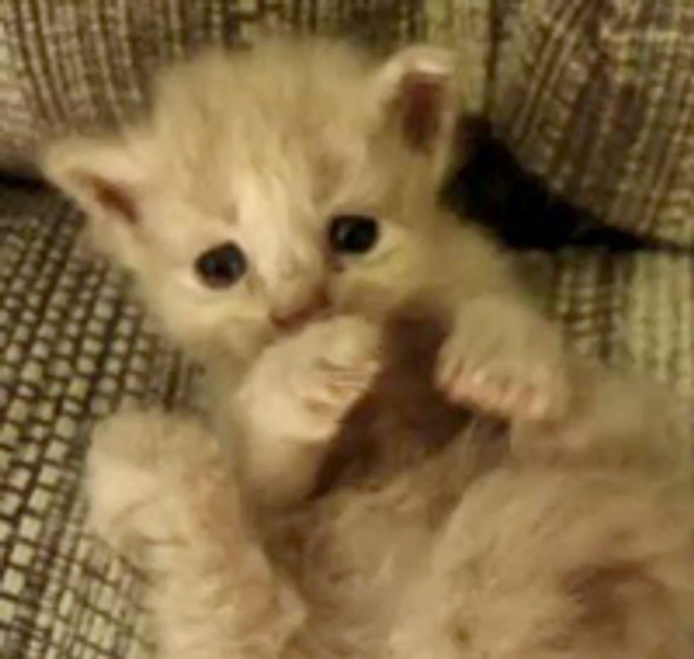 Tiny Squirmy Foster Baby