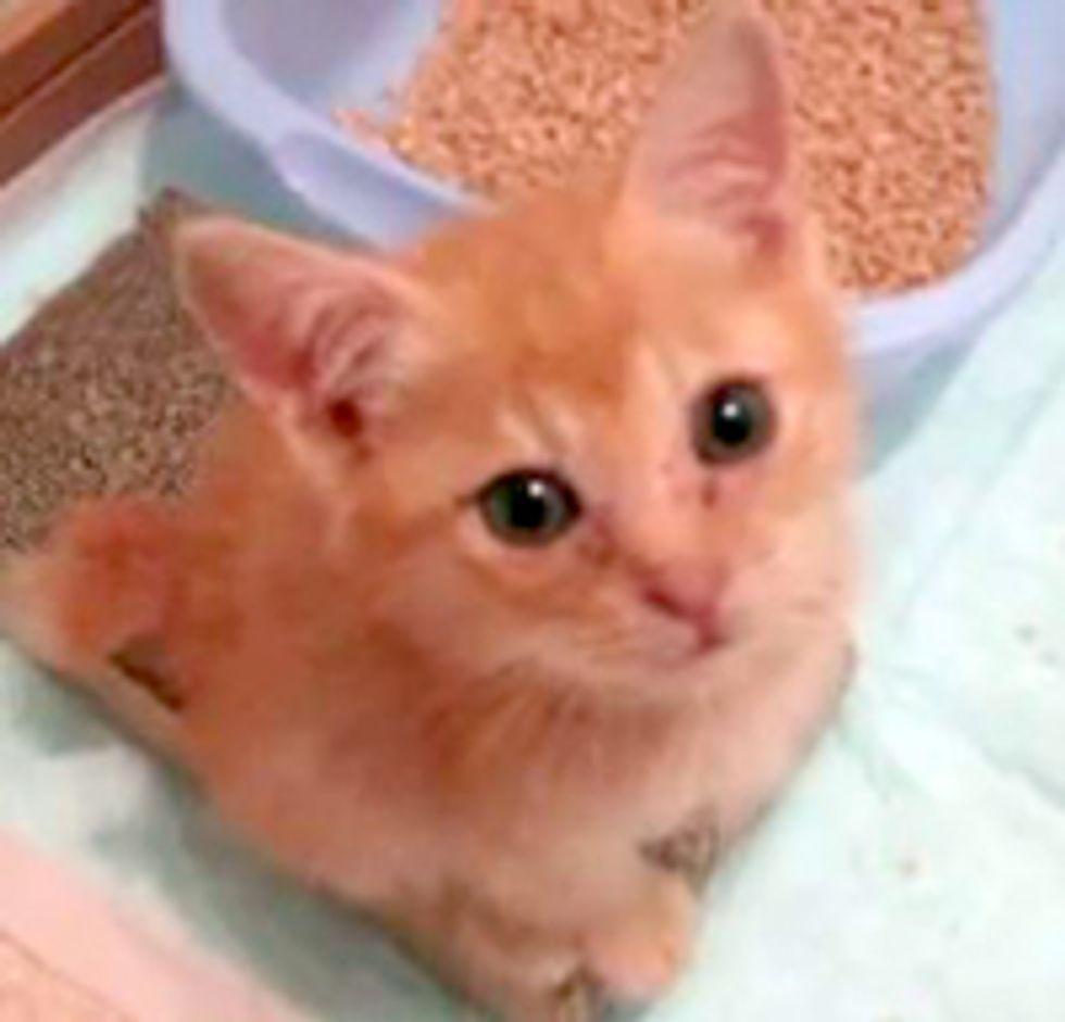 Feisty Rescue Kitten Hunts Down Camera