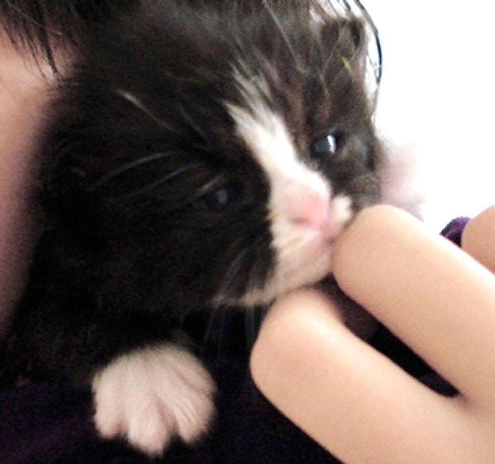 Little Black and White Jem