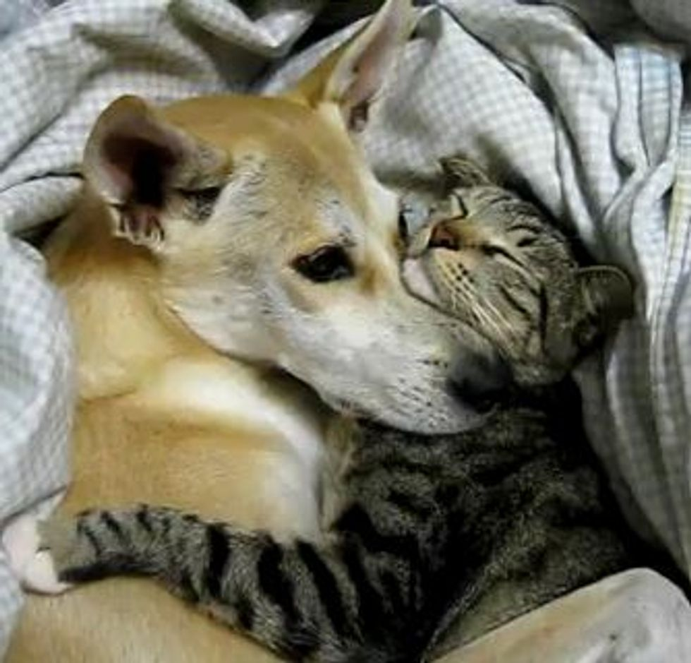 Kitty and Doggie Cuddly Friends