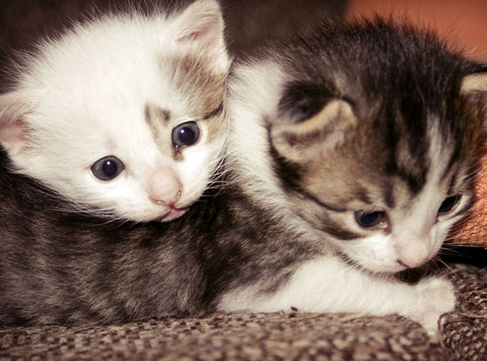 Whispering Kitties