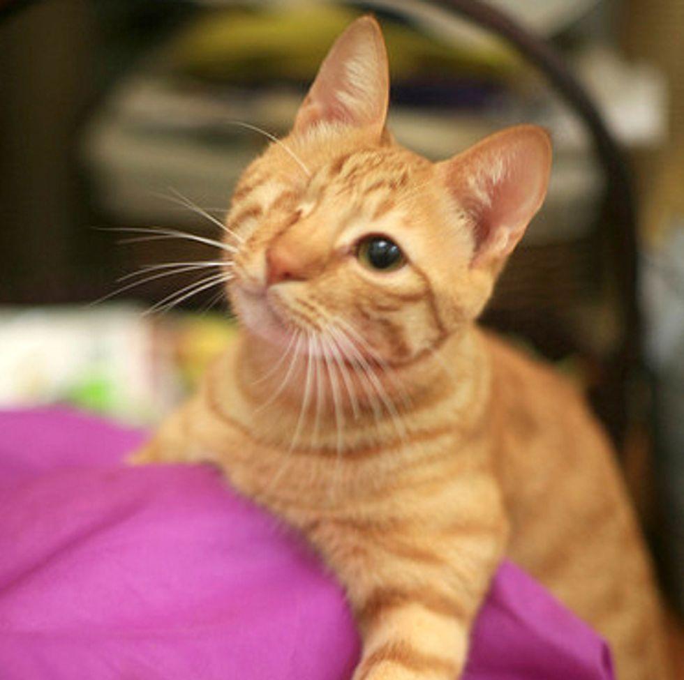 The One Eye Wonder Ginger Cat