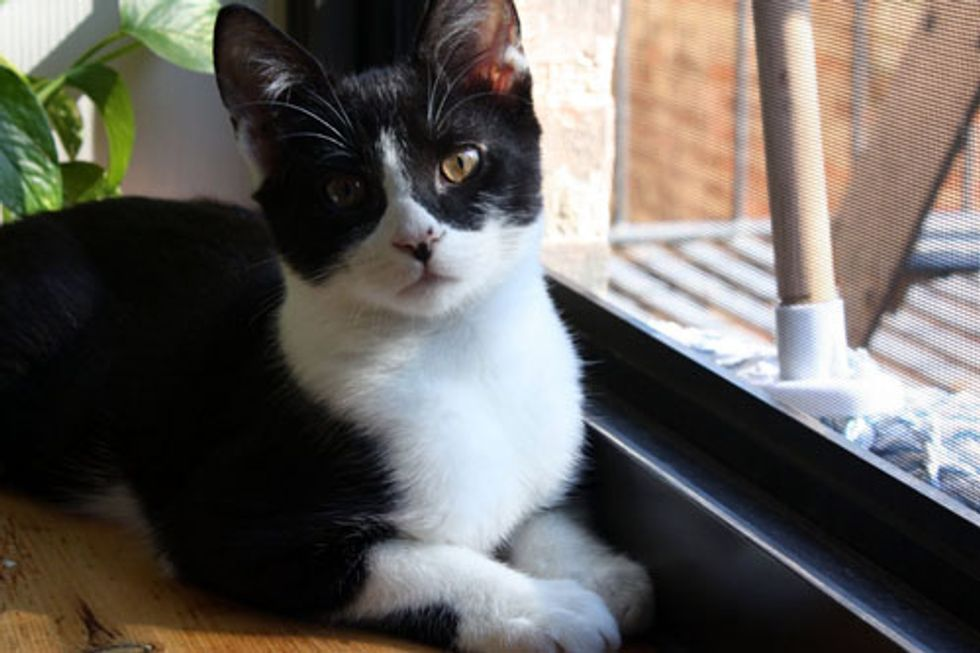 Björn the Cat Needs a New Home