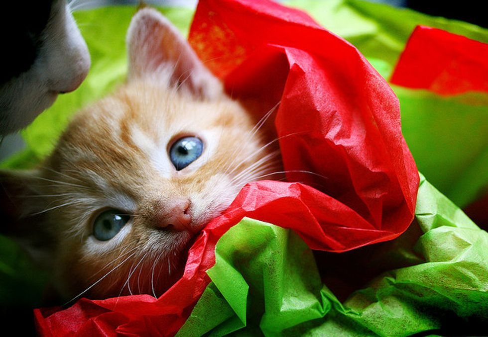 Nimbus the Kitty: from Kitten to Cat