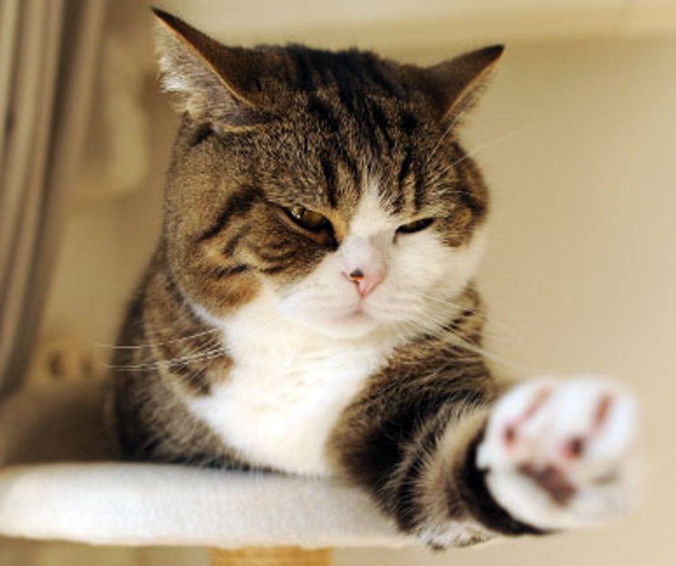 Maru the Kotatsu Kitty