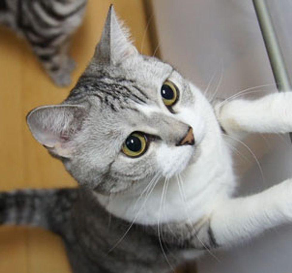 Smart Cat Opens Doors