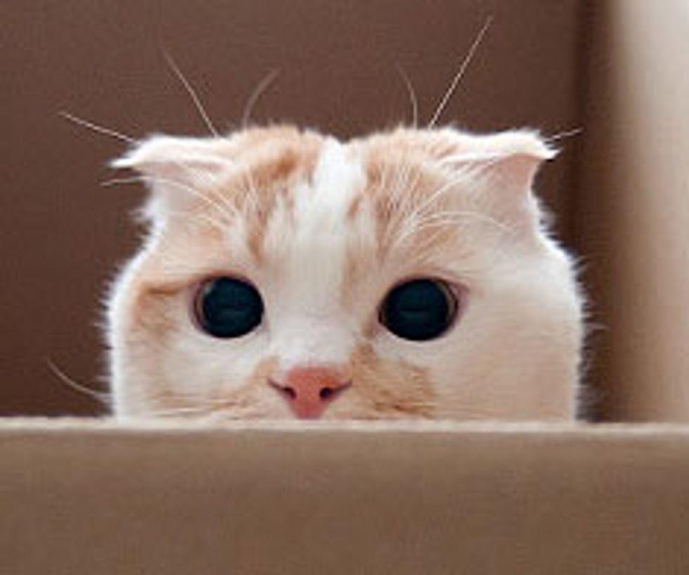 Peek-a-boo Kitty Pokko