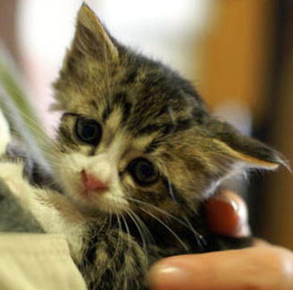 Nora the Homeless Kitten Found New Home