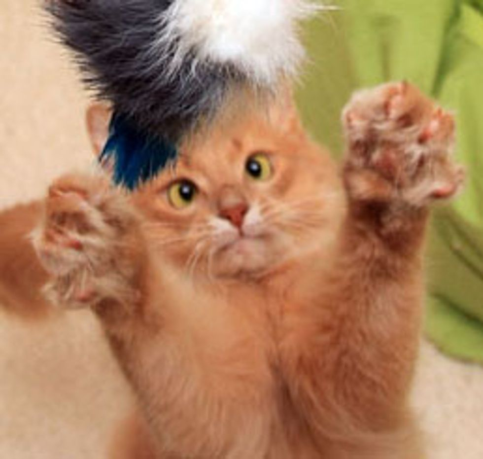 Mocha the Orange Ninja Cat