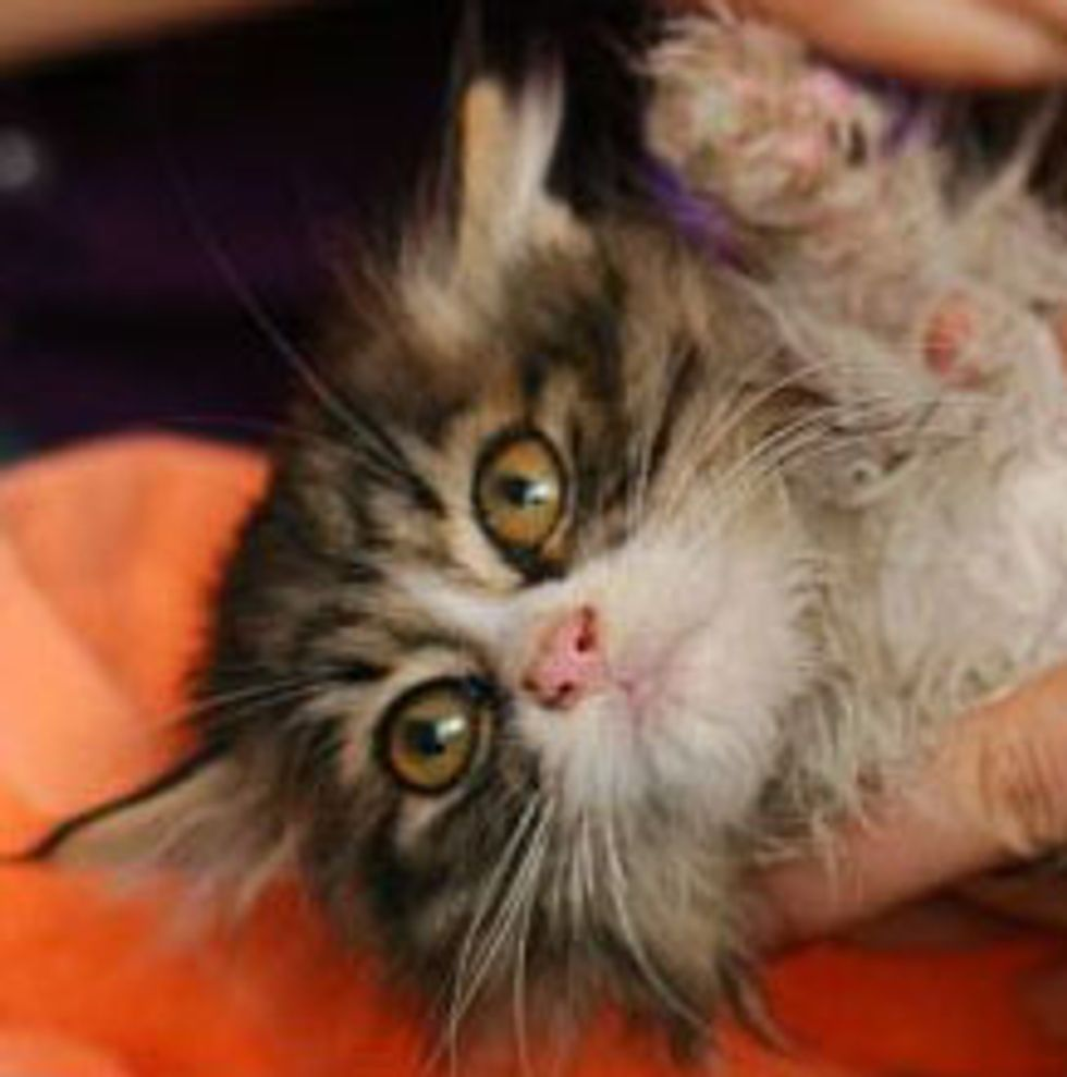 Rescued Kitten Found Forever Home with Foster Parent