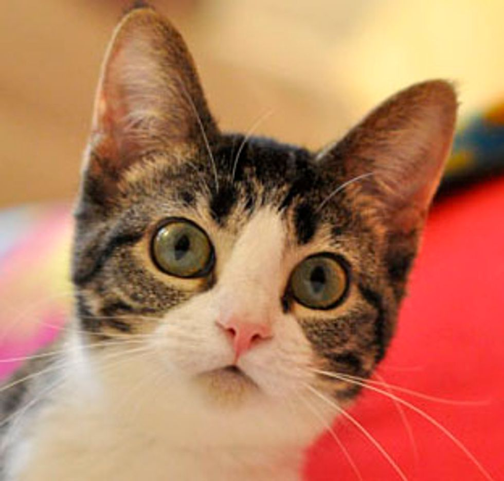 Bella the Shy Kitty Found Her Home