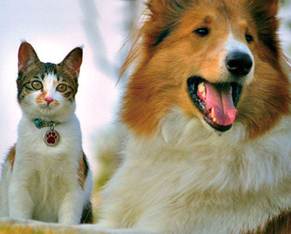 Cat and Her Inseparable Canine Friend