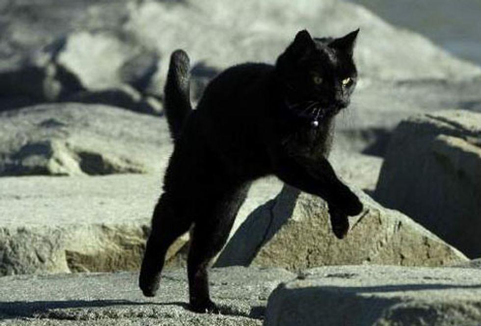 Long Distance Running Cat Roadrunner