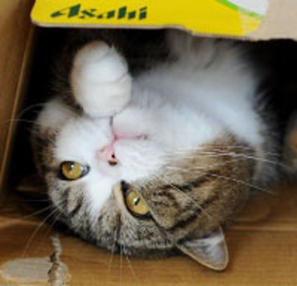 Maru Tries out Fashionable Boxes