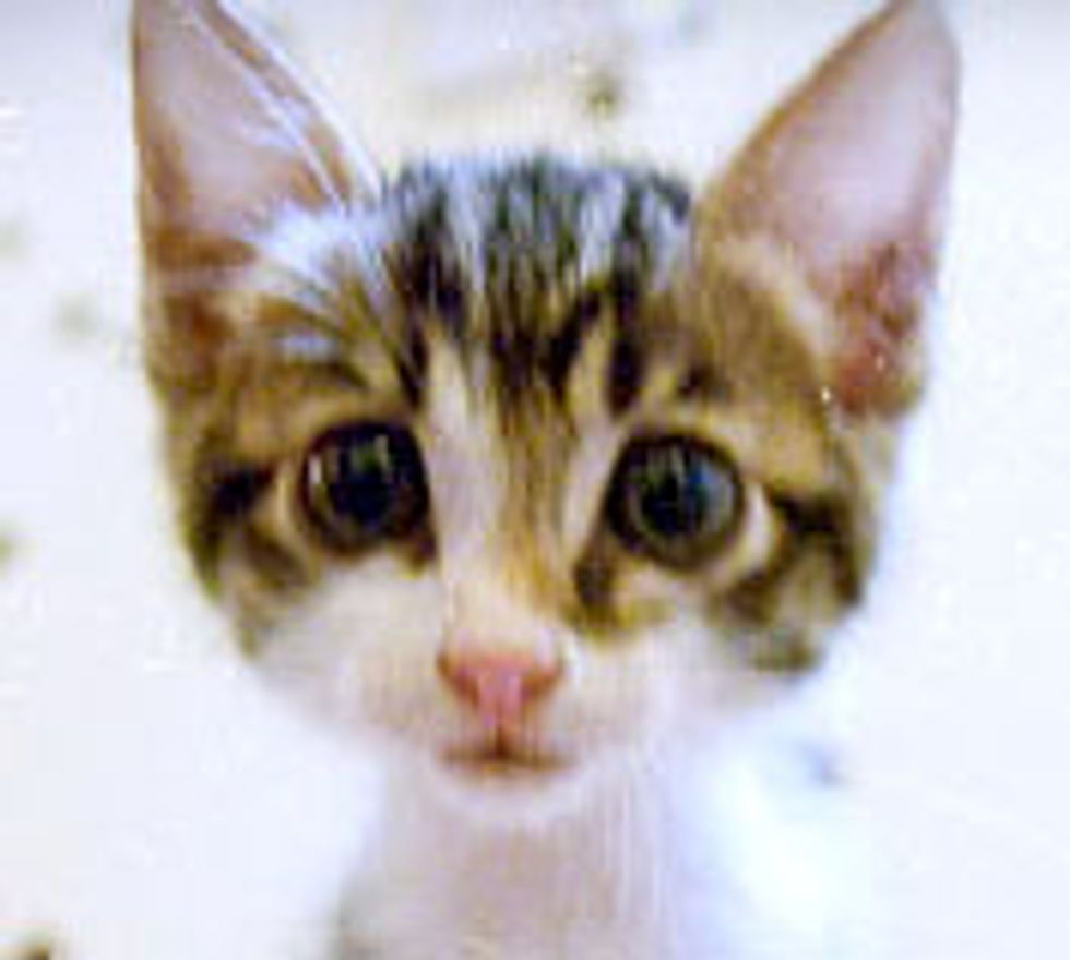Kitty with Radar Ears and Large Eyes