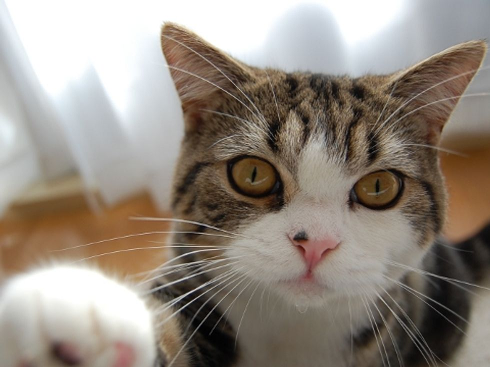 Maru After the Earthquake in Japan