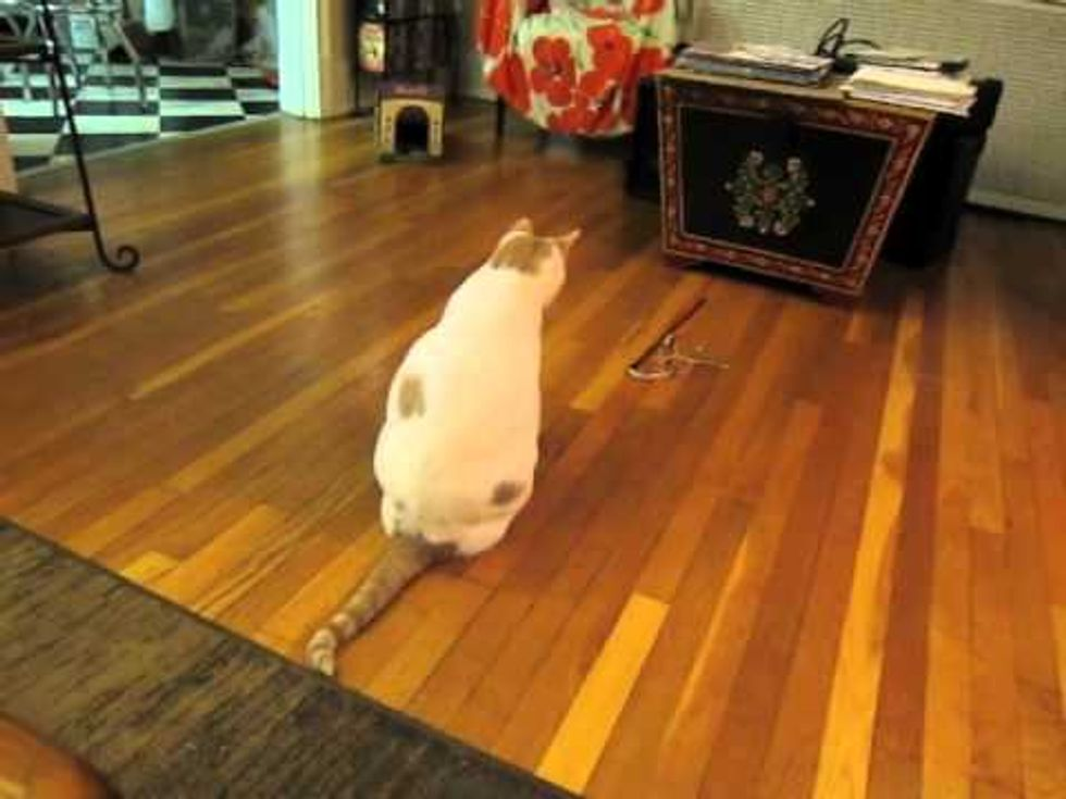 Smart Cat Spins His Toy Wand