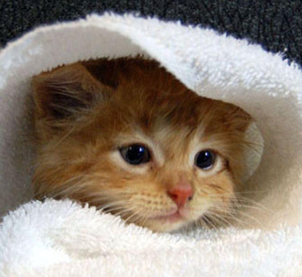 Little Ginger Kitten's First Bath