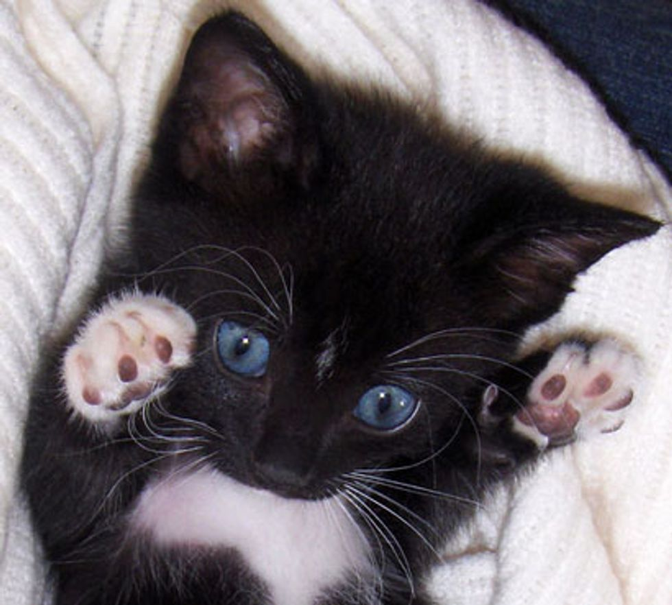 Kitty Shows off Tiny Mittens