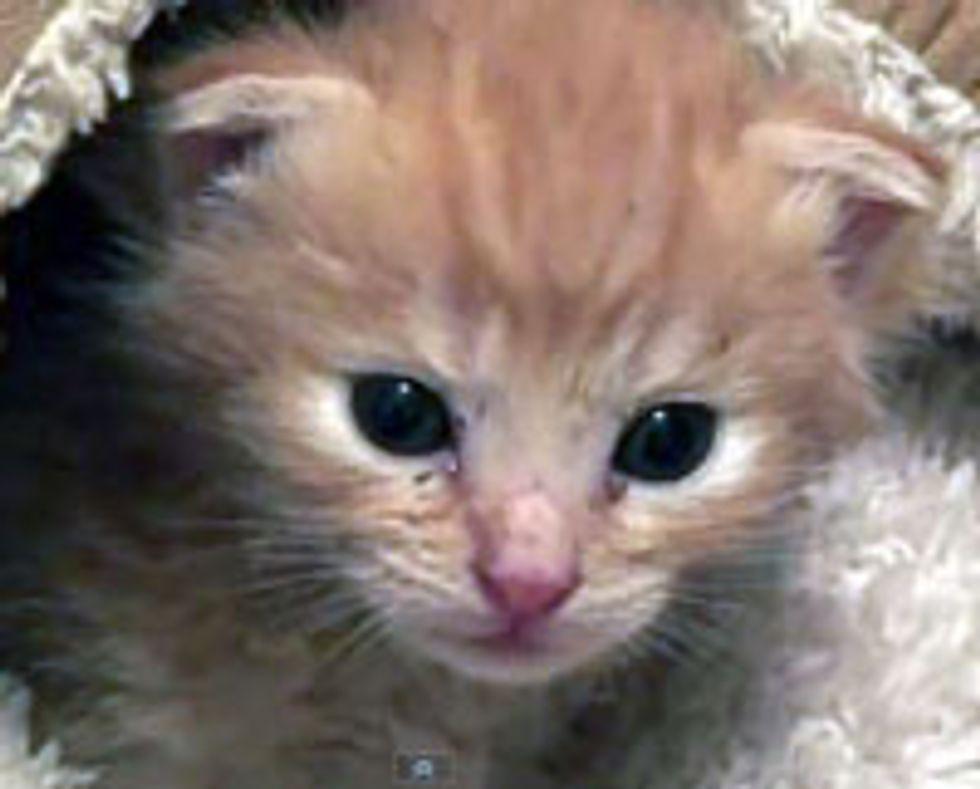 From Kitten to Cat