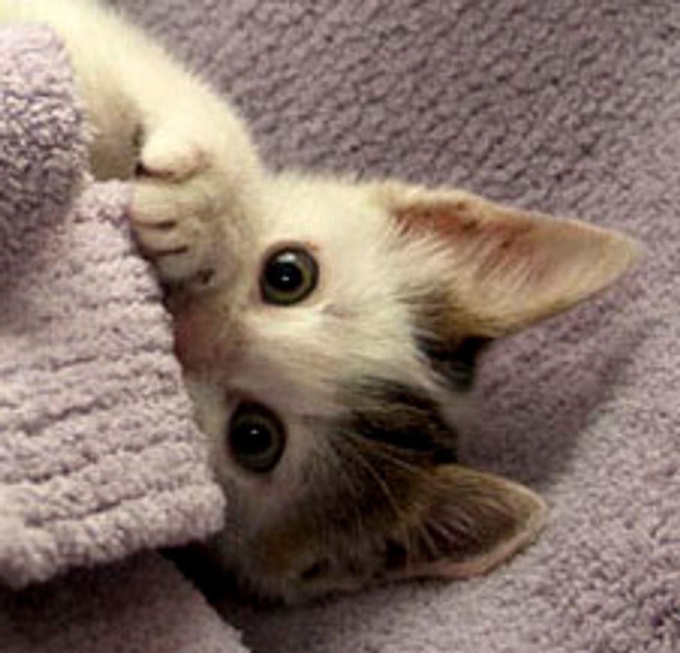 Jumper the Little Stray Kitten