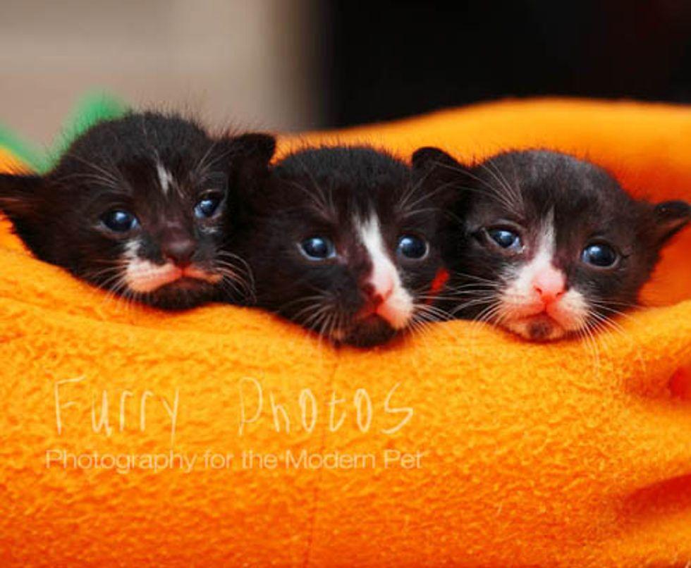 Tiny Tuxedo Trio