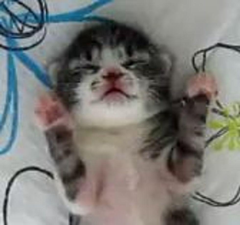 Cute Kitten Sweet Dreams