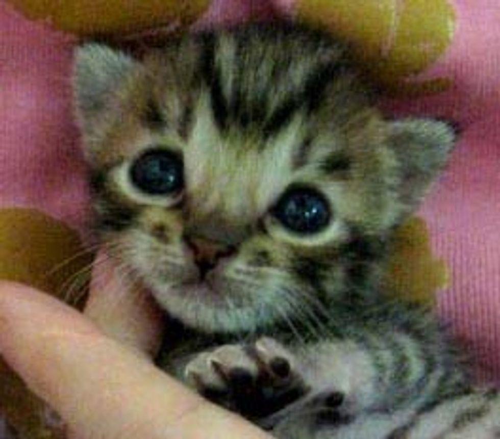 Precious Little Squeaker