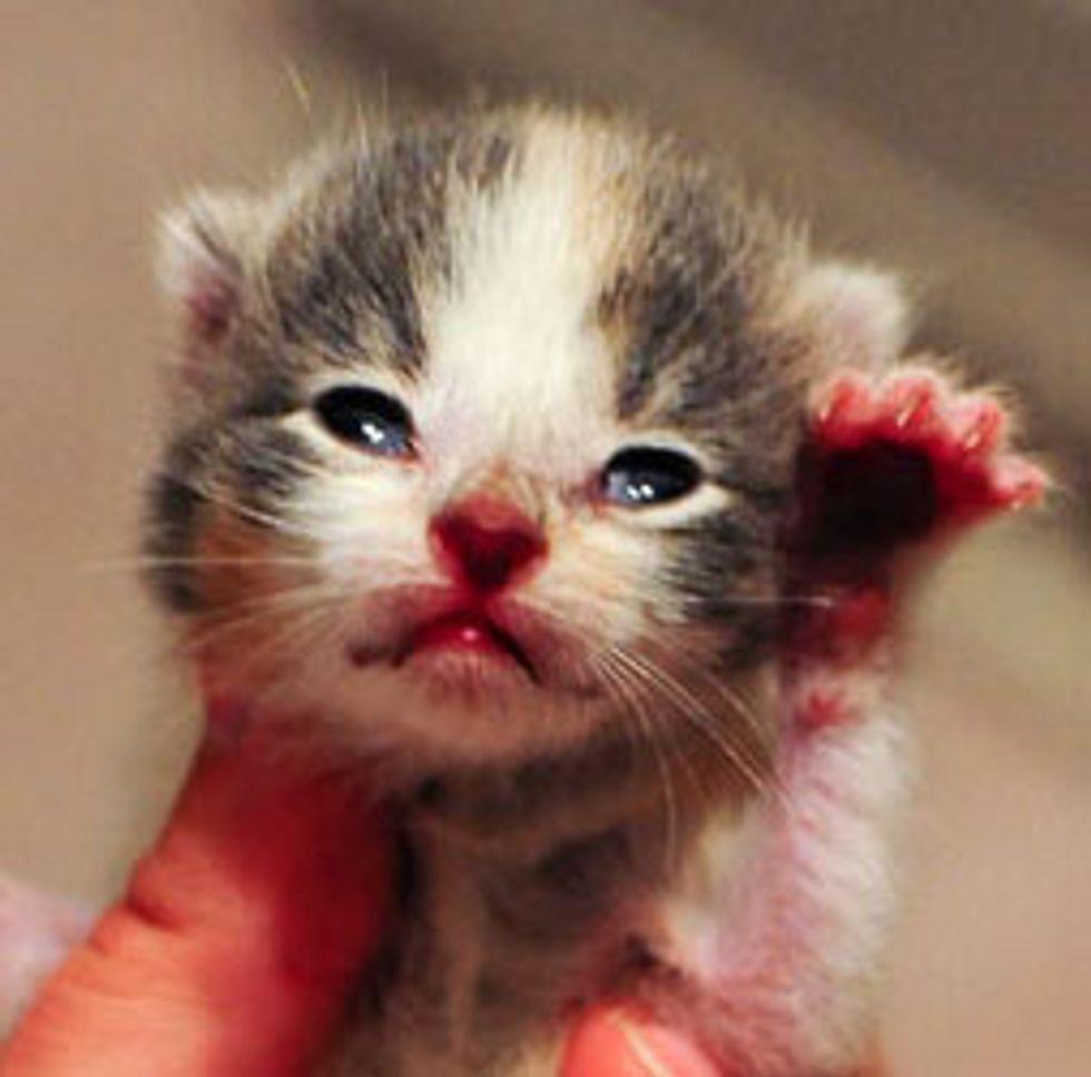 Rescue Cat Family - Glenda Plus 7