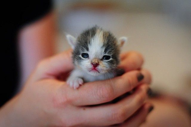 Itty Bitty Foster Claire - Love Meow
