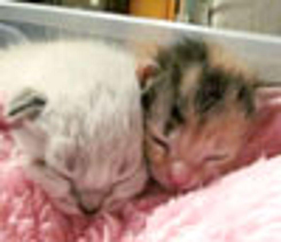 Snuggly Furry Buddies