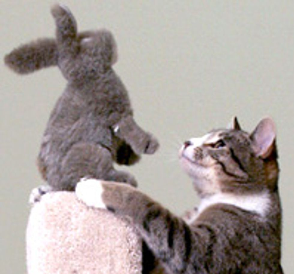 Ozzy the Cat and Her Tolerant Bunny