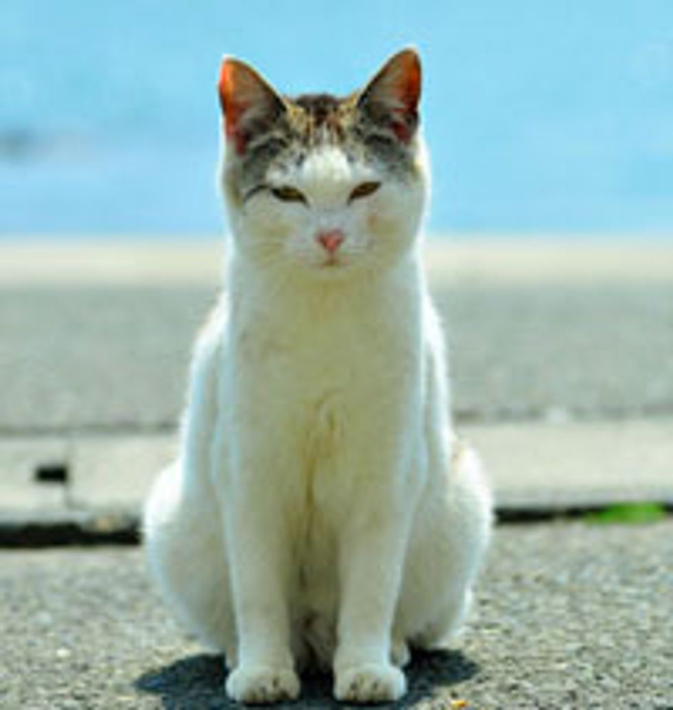 New Photos and Videos of Cat Island After Japan Earthquake
