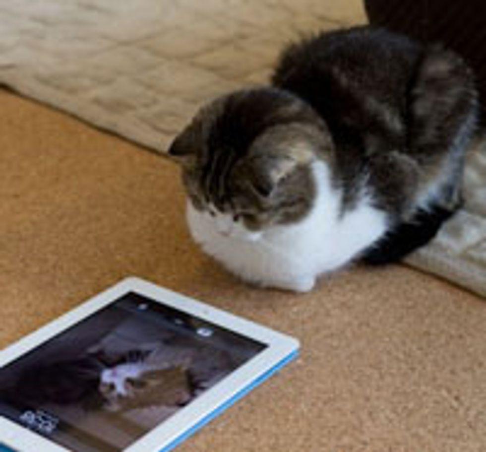Tech Savvy Kitty Plays with iPad 2