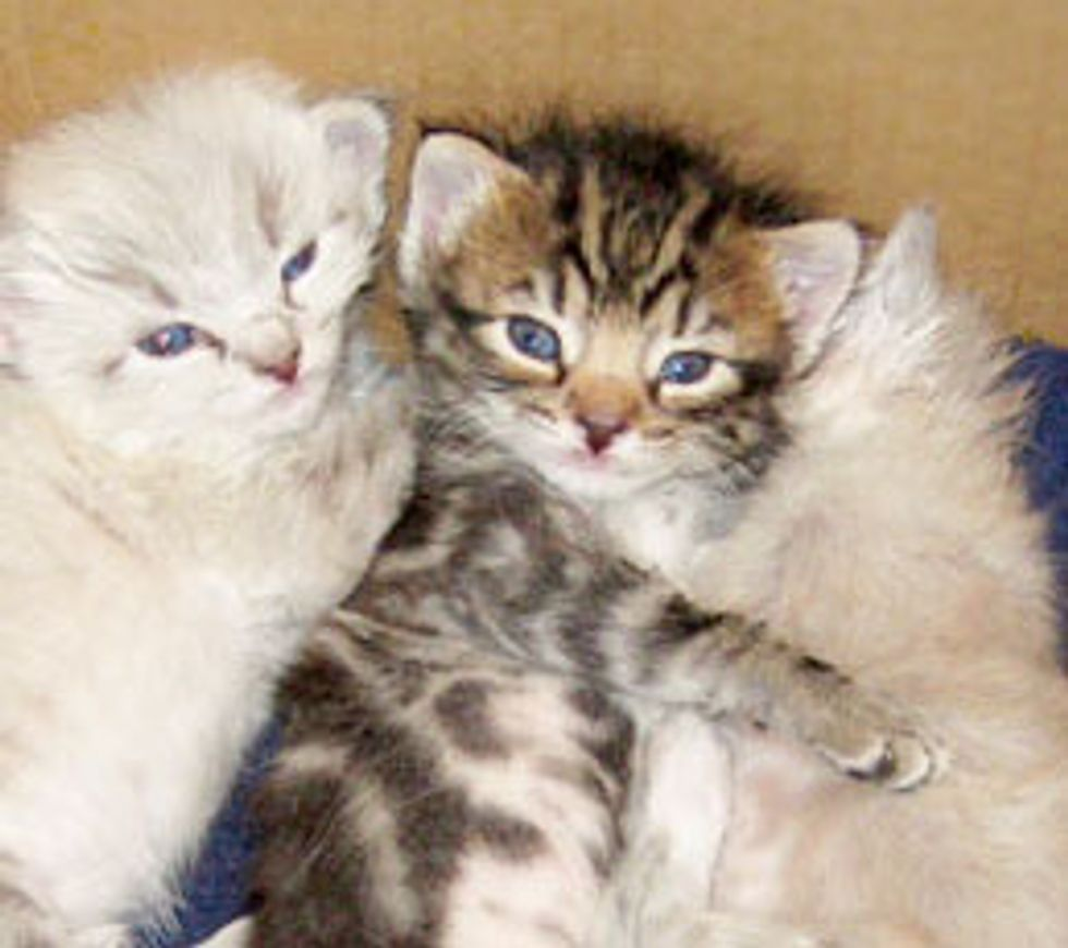 Three Construction Kittens