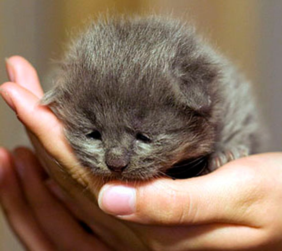 Fuzzy Grey Foster