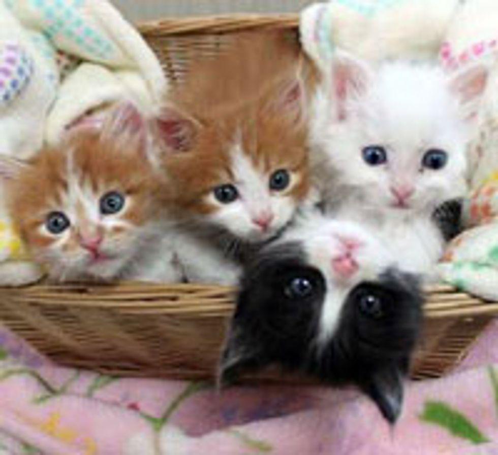 Four Lucky Kitties
