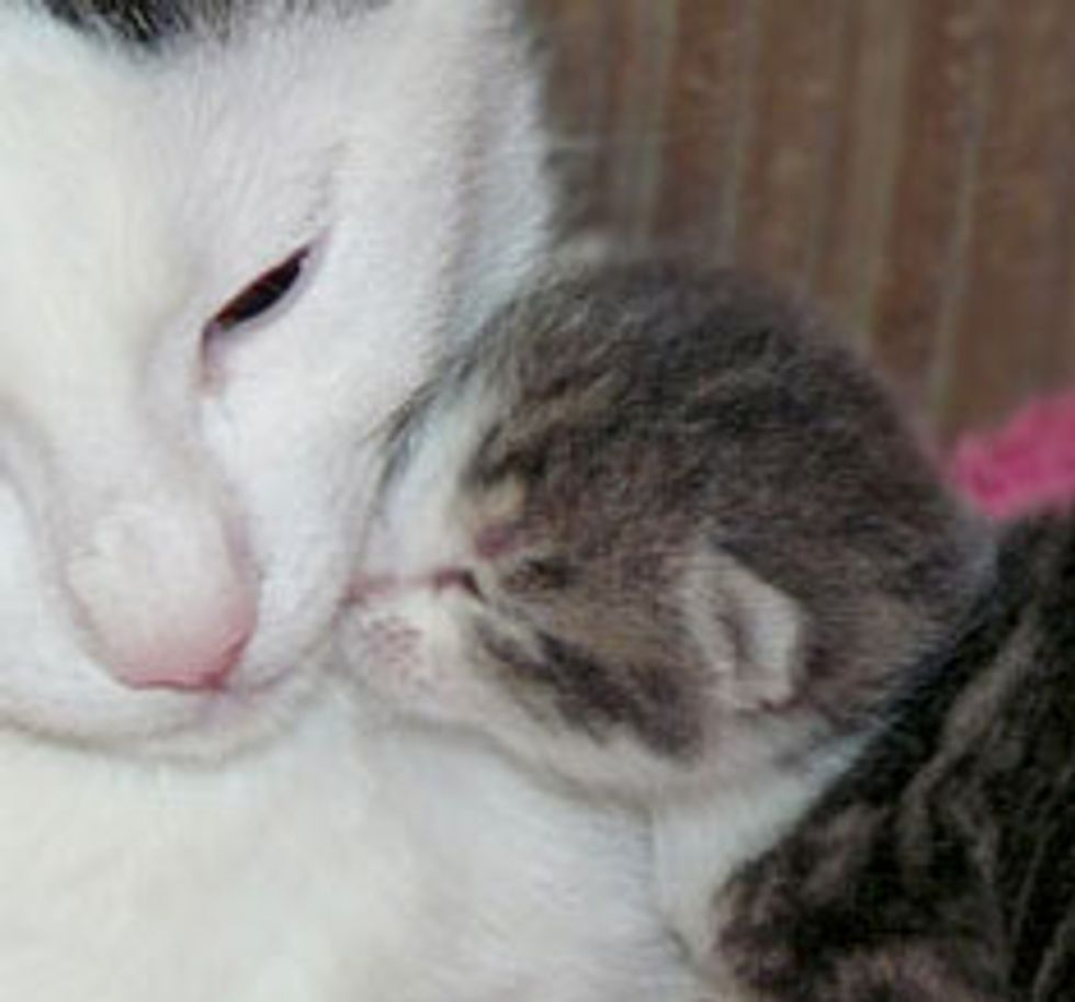 Kitten Becomes 'Dad' to Orphaned Kittens