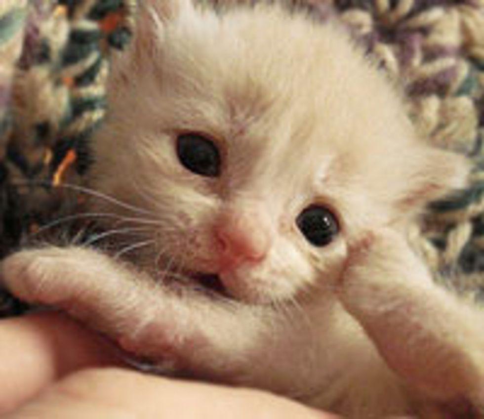 Resilient Little Ginger Horatio